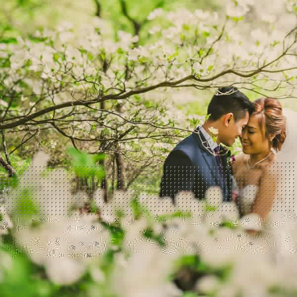 Beautiful cherry blossom wedding portrait